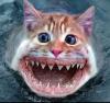Аватар пользователя Abusio
